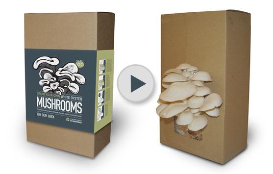 mr fothergills mushroom kit instructions