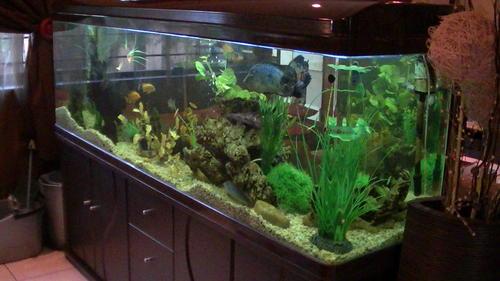 Litre Glass Fish Tank
