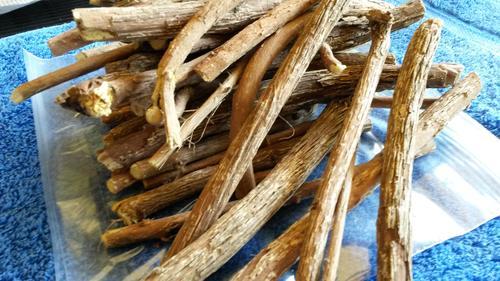 African Dream Herb - Ubhubhubhu (Helinus integrifolius) - Fresh stock    bidorbuy co za