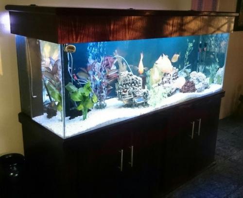 Fish Tanks Aquariums Aquarium 6ft 1 8 X 580 X 610