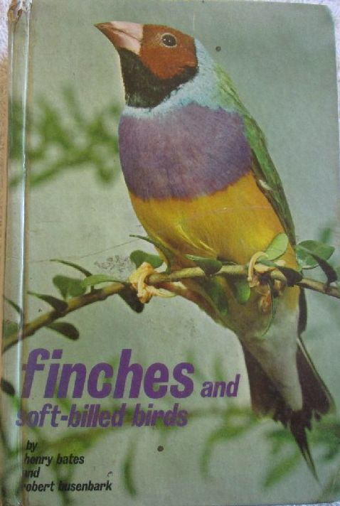 Olx Birds Related Keywords & Suggestions - Olx Birds Long