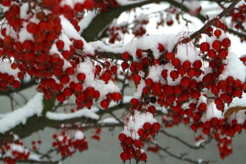 Winter Garden Ideas plant a winter garden Garden Design With Winter Plants Turn Your Garden Into A Winter Wonderland With Backyard Pond