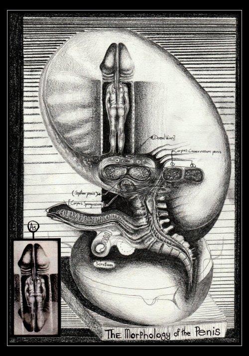 erecție și stâlp bun pentru penis