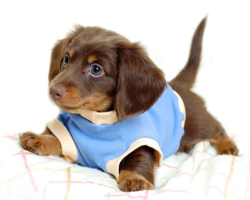 Common puppy diseases to watch out for